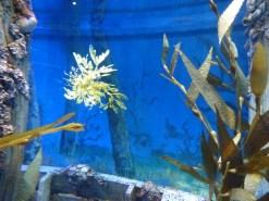 SEA-Aquarium-Experience-45