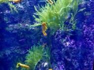 SEA-Aquarium-Experience-46