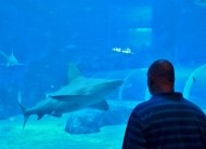SEA-Aquarium-Experience-5