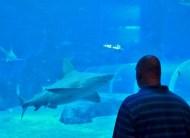 SEA-Aquarium-Experience-5