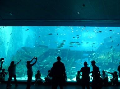 SEA-Aquarium-Experience-7
