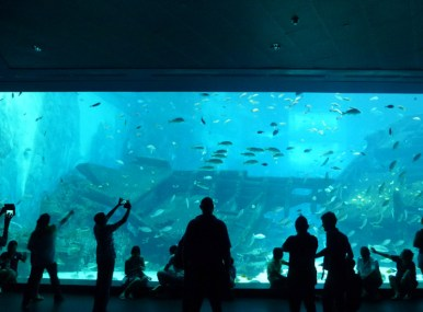 SEA-Aquarium-Experience-7