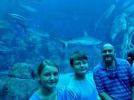 SEA-Aquariuam-Experience-9