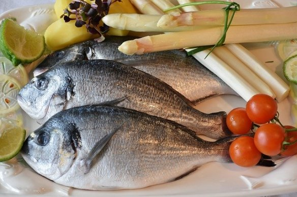 Gilthead sea bream - Dorada