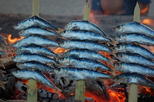Sardines - Sardina spain espetos