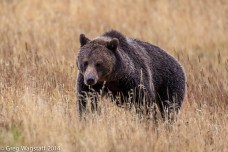 Grizzly Tales-16