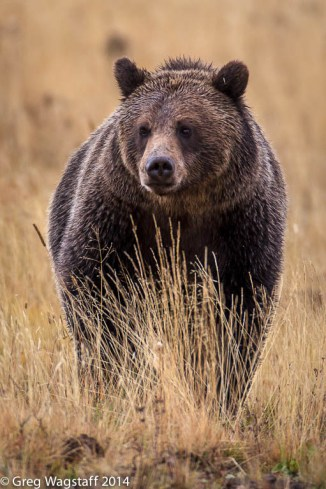 Grizzly Tales-18