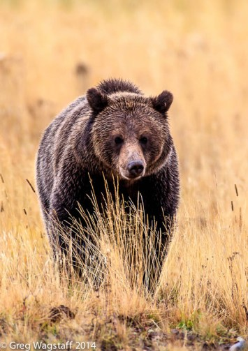 Grizzly Tales-19