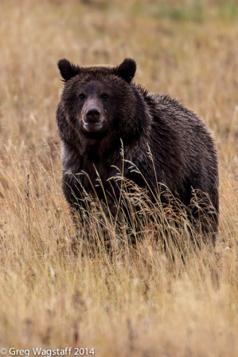 Grizzly Tales-20