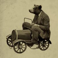 bear-driving
