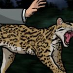 SSDs are nearly identical to Ocelots