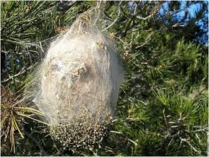 Consultation vétérinaire en ligne Nid d'abeille