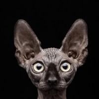 vétérinaire en ligne chat