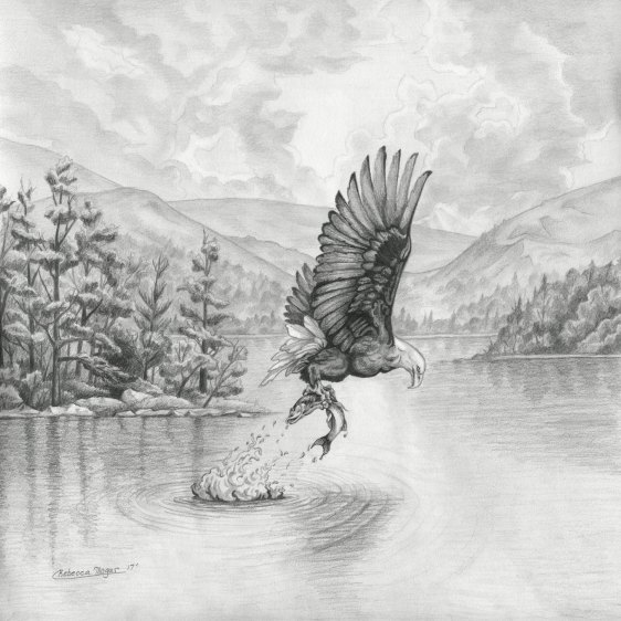 Sketch of Eagle Catching Fish for the Ooo Album Cover by Rebecca Magar