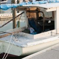 Mistletoe 228 - Sailing Sunday