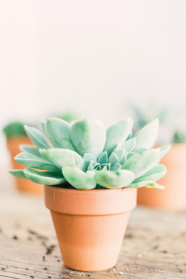 Succulent arrangements make the perfect gift
