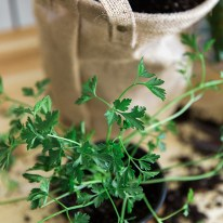 How to plant an indoor herb garden, Waiting On Martha   Photography Kathryn McCrary