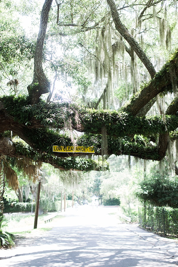Low clearance for Spanish moss in Beaufort, SC via Waiting on Martha