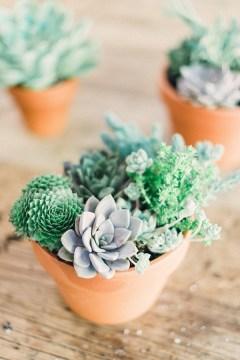 DIY succulents, Waiting on Martha