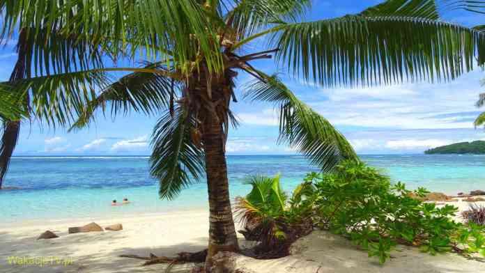 Seszele - piękna błękitna plaża z palmą i kąpiąca się dwójka ludzi