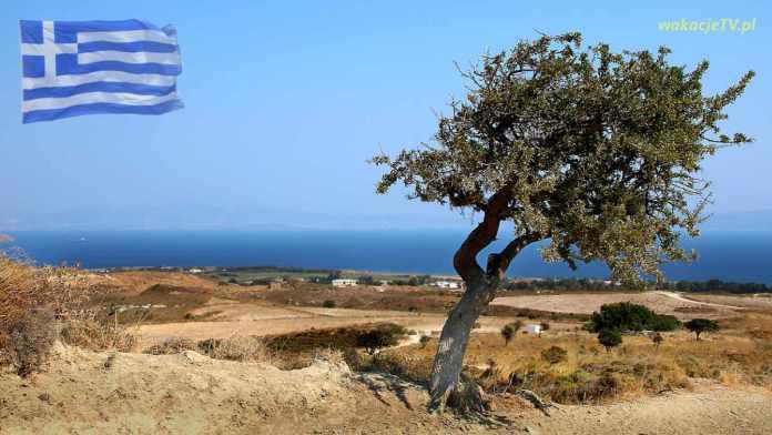 Wyspa Kos widok samotnbe drzewo i morze