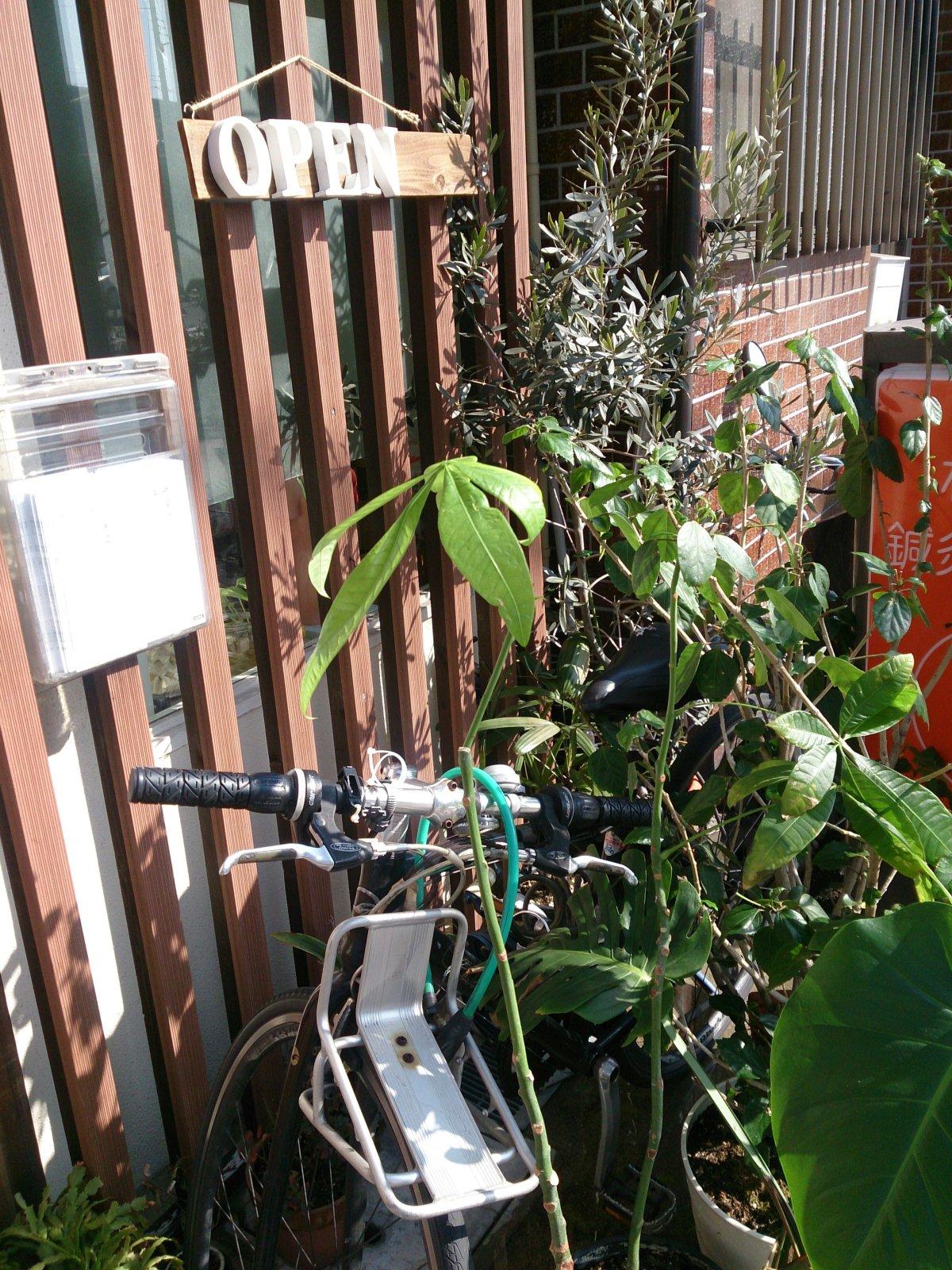 院内観葉植物を日光浴させてます!わかき鍼灸整骨院