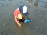 Clamming best season