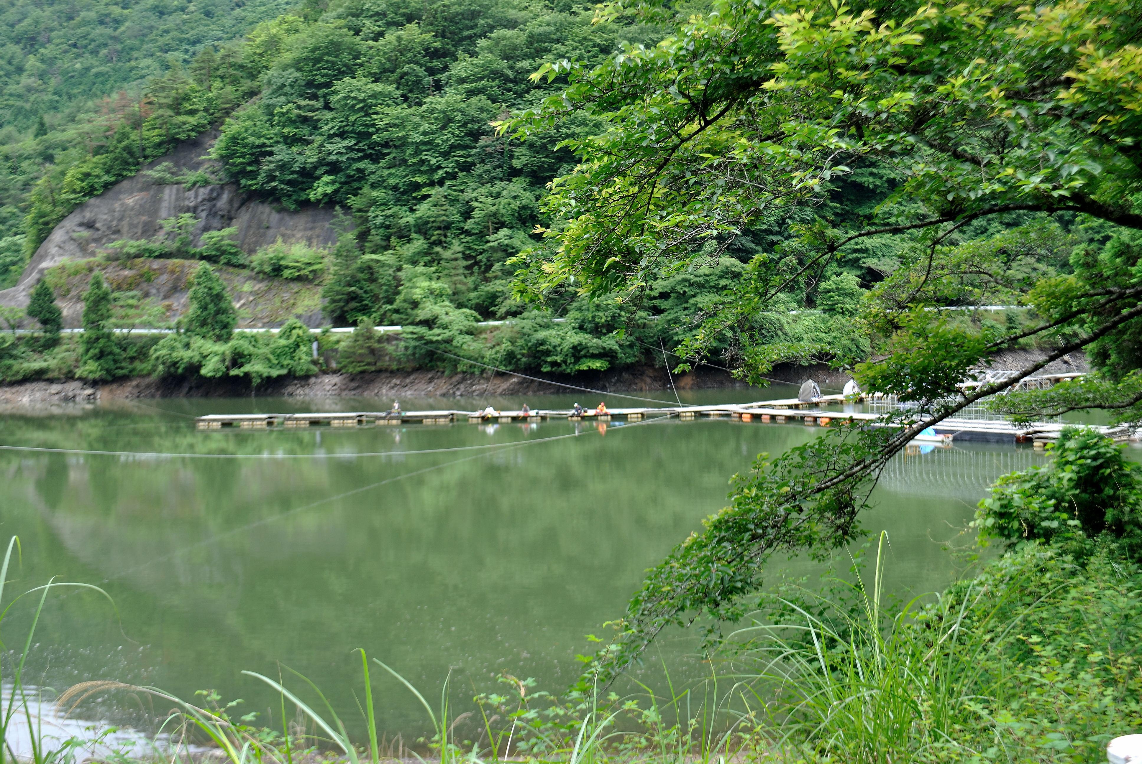 中央分水界の徑 鏡峠~鋸山~栗柄峠   wakasa15thfd