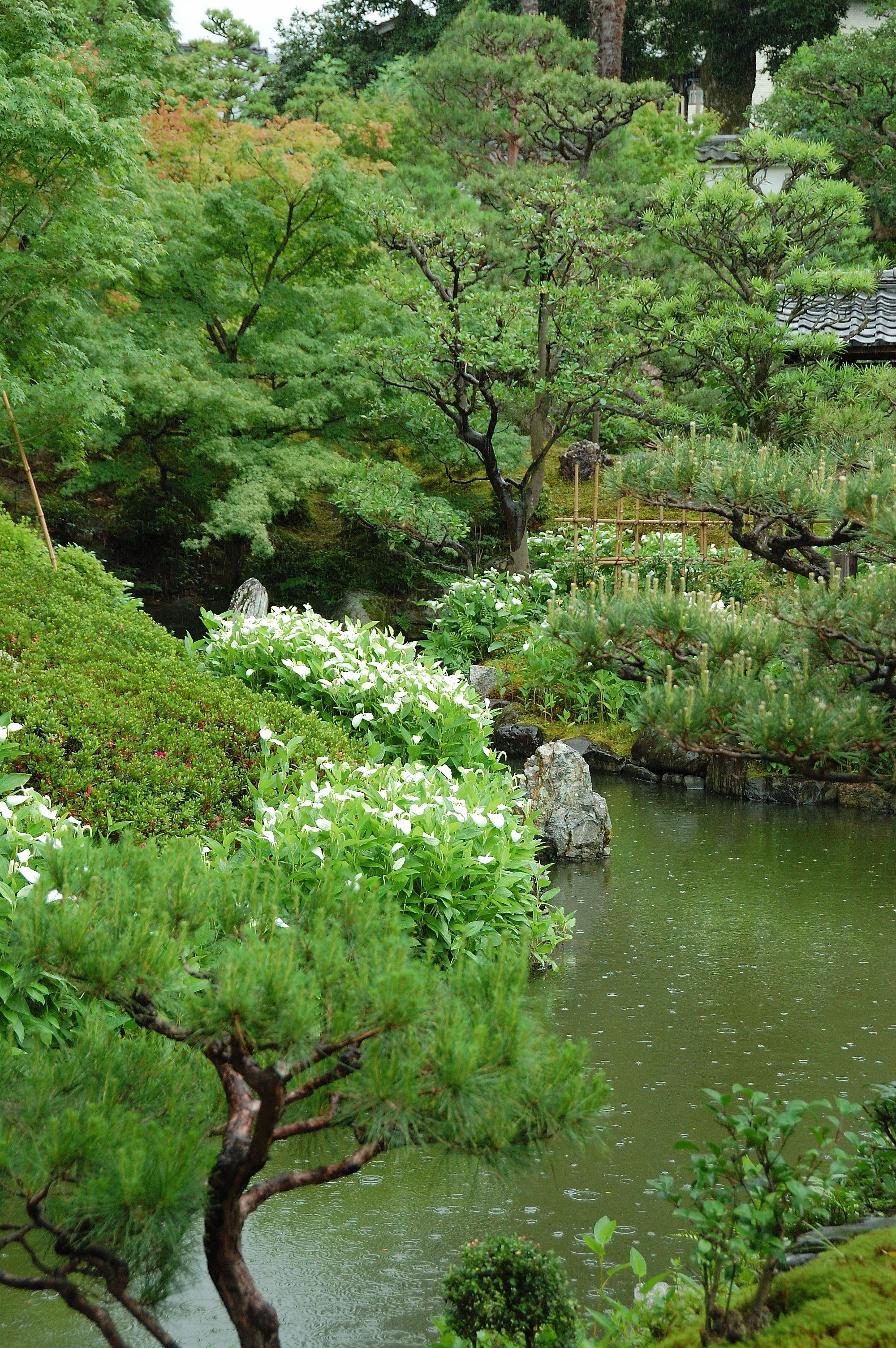 半夏生咲く京都・両足院2016 | wakasa15thfd