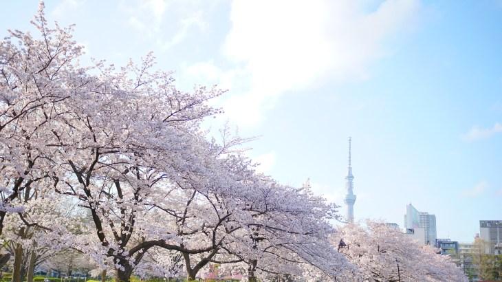 柔らかな光と桜