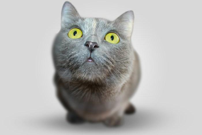 とぼけた顔の猫