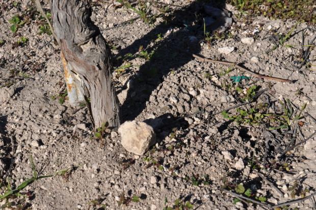 Limestone Soils, Harrison Clark Vineyard