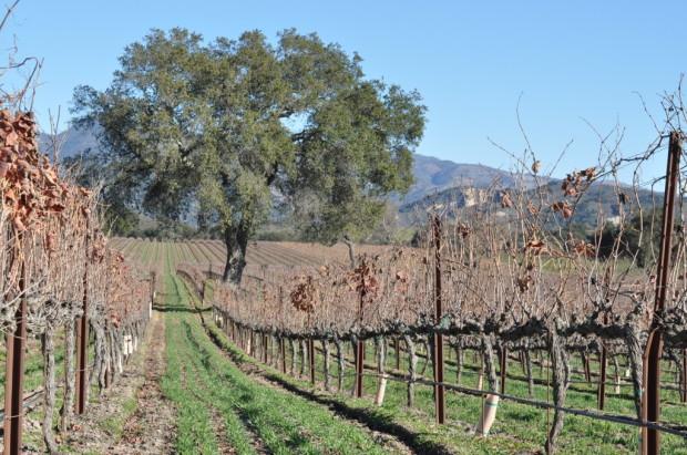 Fess Parker Vineyards
