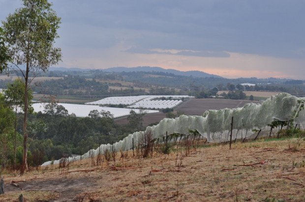 Looking into the Yarra Valley