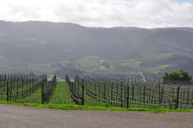Looking at S&B Vineyard from Mt Carmel