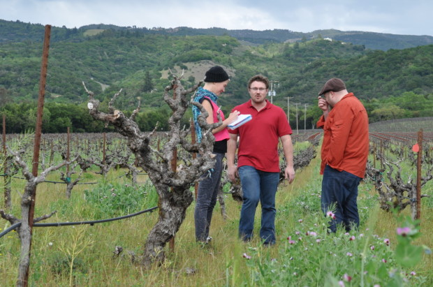 Vines from the 1880s, Bedrock Vineyard, Carla, Morgan, and Chris