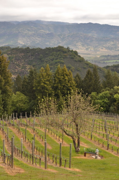View from the top, Mt Veeder, Lagier-Meredith