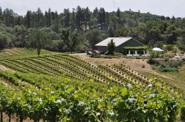 Shake Ridge Vineyard