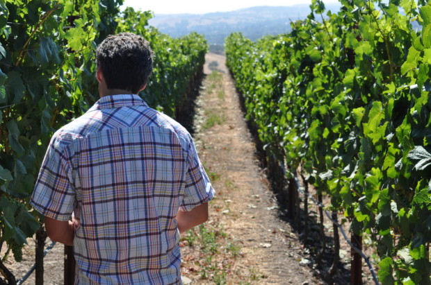 Stephane walking in one of his sections of Sonoma vineyards