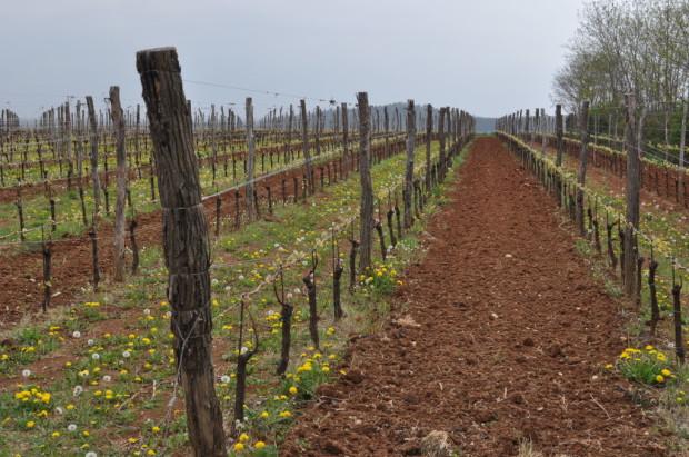 the Betulle Vineyards