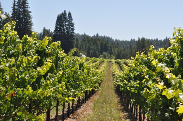 Campbell Ranch Vineyard, Fort Ross-Seaview
