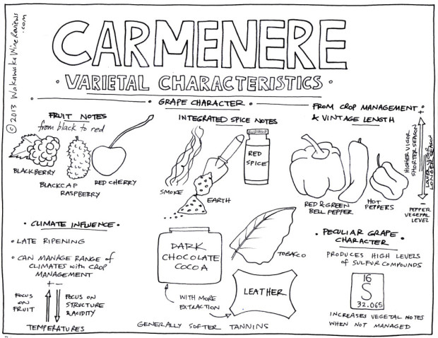 Carmenere Grape Characteristics