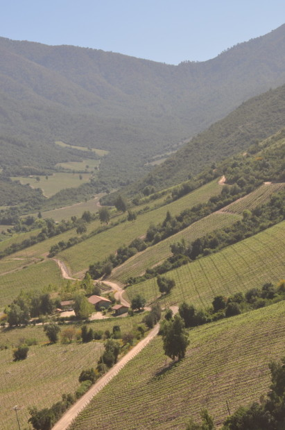 Looking into the Apalta Valley