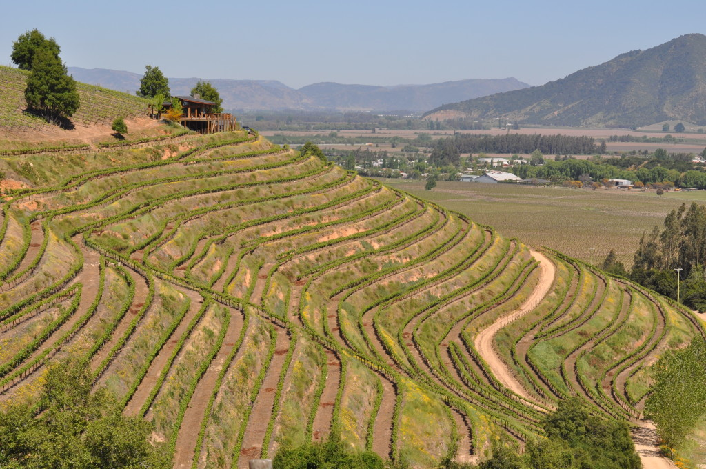 The Steep Slopes Of Apalta, Colchagua Valley Hawk