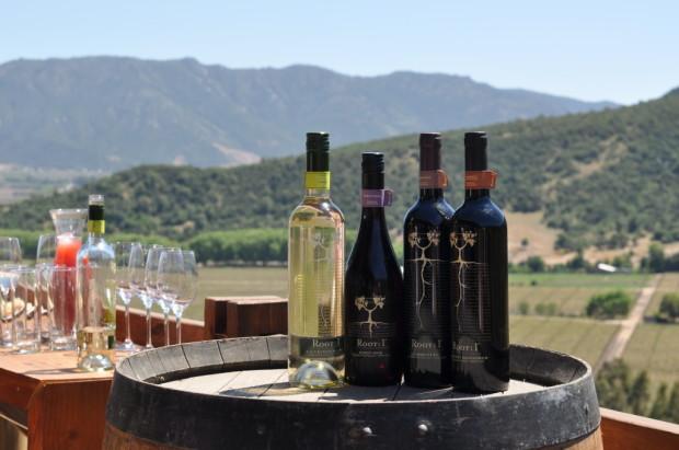 Some of Vina Ventisquero wines, Root 1, crazy good value