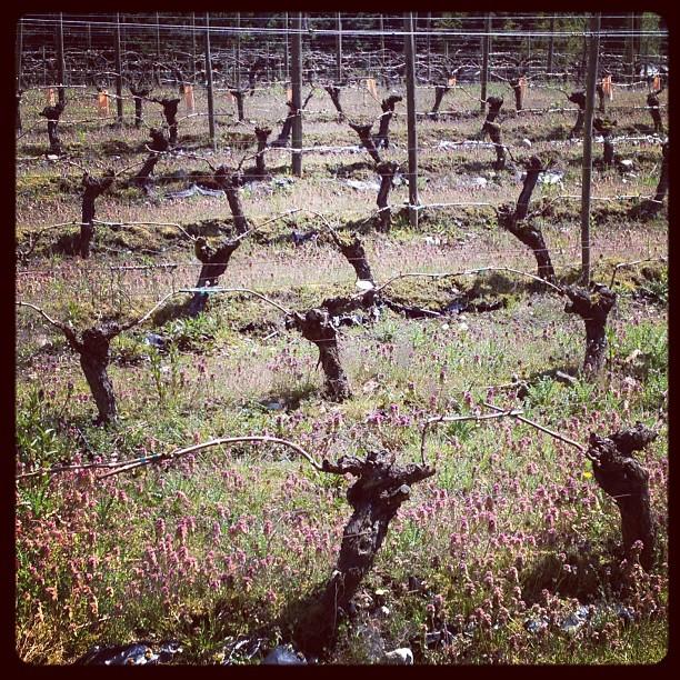 Whidbey Island Vineyards