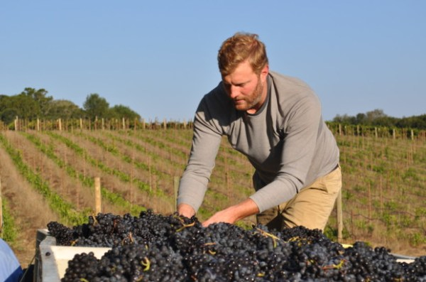 Shawn checking the Pinot Meunier
