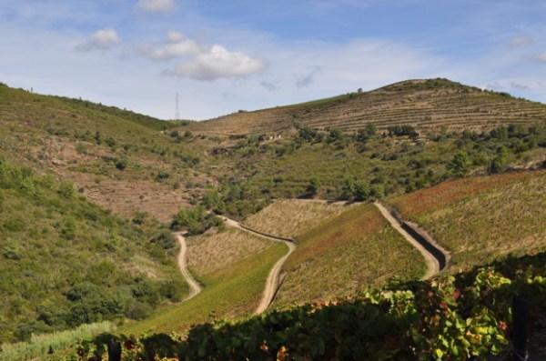 Looking into Assobio Vineyard