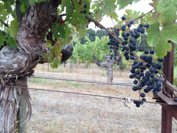 Sonoma Mountain Cabernet