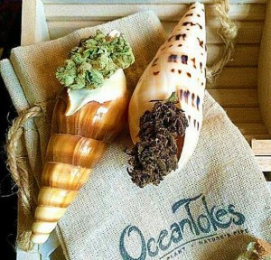 OceanTokes-Seashell-Smoking-Pipe-Gift-Idea-for-Pot-Head-Friends-590x566
